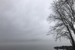 Grey on Grey on Grey (Long Pond, December 2019)