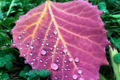 Leaf and Rain