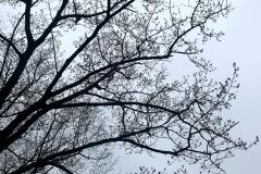 Tree Lace