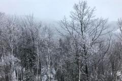 snowtrees2-2000-sfw