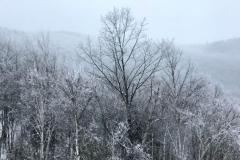 snowtrees3-2000-sfw