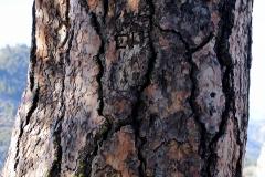 bark1-3000-sfw