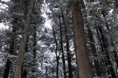 qrtrees-3000-sfw