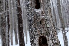 treeholes-3000-sfw
