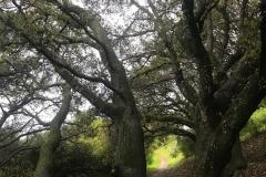 treepath-3000-sfw