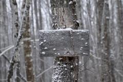 treesign-3000-sfw