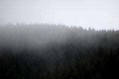 treesmist-3000-sfw