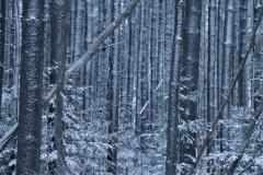 wintertrees-3000-sfw